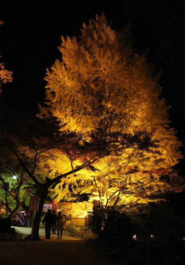 香嵐渓紅葉ライトアップ